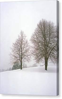 Foggy Morning Landscape 19 Canvas Print by Steve Ohlsen