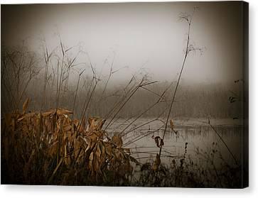 Foggy Morning Marsh Canvas Print by Carolyn Marshall