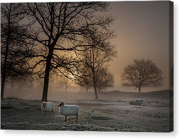 Foggy Morning Canvas Print by Piet Haaksma