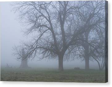 Foggy Morning Canvas Print by Randy Bayne
