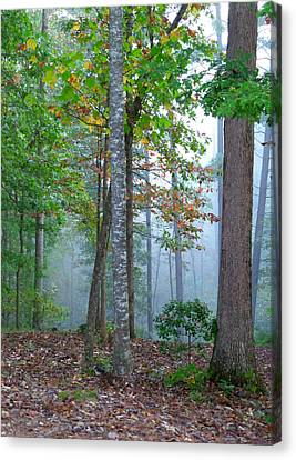 Foggy Morning Canvas Print by Rosie Brown