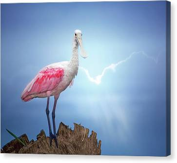 Spoonbill Canvas Print - Foggy Morning Spoonbill by Mark Andrew Thomas