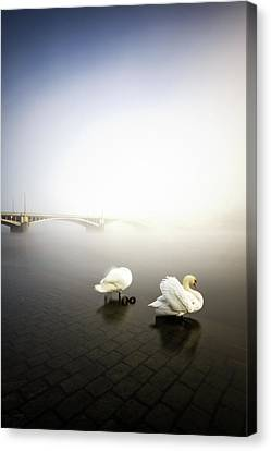 Foggy Morning View Near Bridge With Two Swans At Vltava River, Prague, Czech Republic Canvas Print