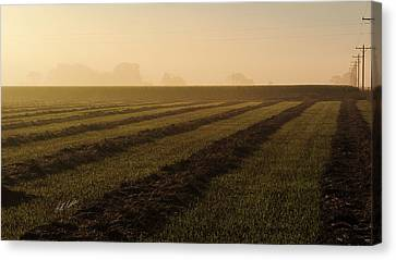 Foggy Morning Windrows Canvas Print