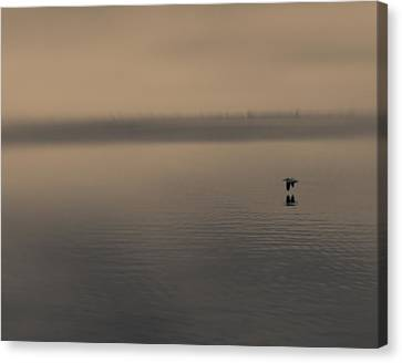 Canvas Print featuring the photograph Foggy Pelican by Ron Dubin
