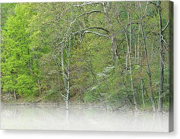 Dogwood Lake Canvas Print - Foggy Spring Shoreline Hall Lake by Dean Pennala