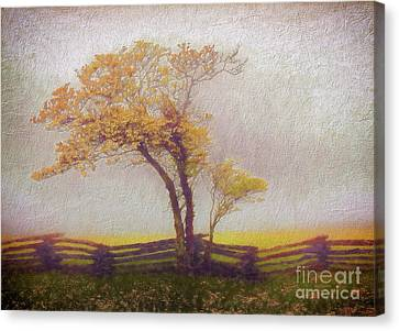 Foggy Tree And Fence In The Blue Ridge Ap Canvas Print