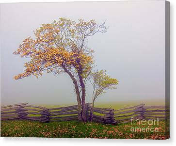 Foggy Tree And Fence In The Blue Ridge Canvas Print by Dan Carmichael
