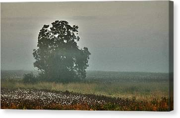 Foggy Tree In The Field Canvas Print by Michael Thomas