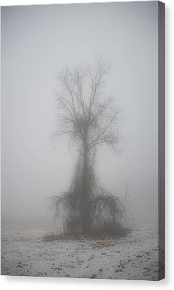 Canvas Print featuring the photograph Foggy Walnut by Wanda Krack