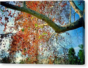 Foliage Canvas Print by Adrian Vajiac