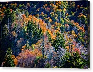Foliage From Chimney Tops Canvas Print by Rick Berk