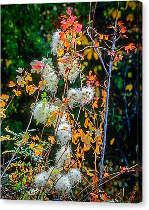Foliage Twisted Colored Leaves Canvas Print