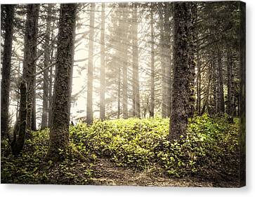 Follow The Light Canvas Print by Debra and Dave Vanderlaan