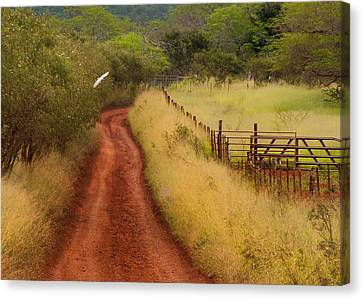 Follow The Red Dirt Road Canvas Print