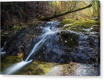 Canvas Print featuring the photograph Follow The Stream by Yuri Santin