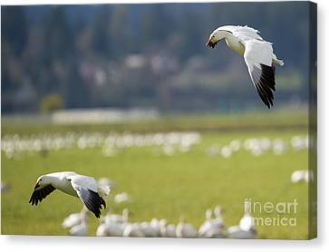Follow You In Canvas Print by Mike Dawson