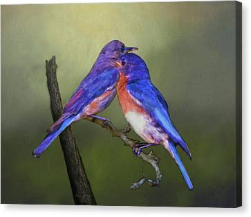 For Love Of Bluebirds Canvas Print by Sandi OReilly