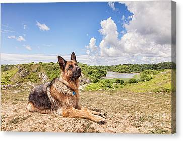 For The Love Of Dogs Canvas Print by Colin and Linda McKie
