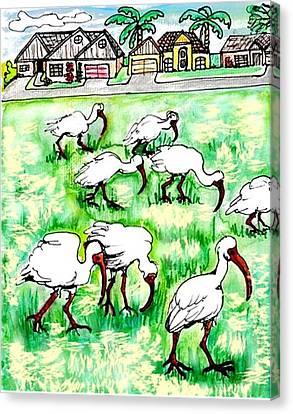 Foraging Ibis Canvas Print