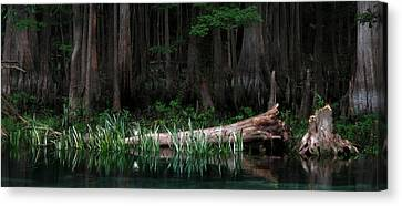 Forbidden Swamp Canvas Print by Matt Tilghman