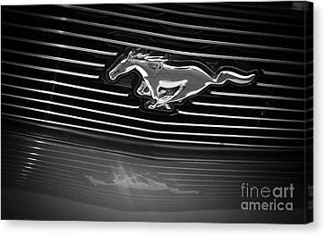 Ford Mustang Grill - Black And White Canvas Print