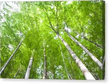 Canvas Print featuring the photograph Forest 1 by Jean Bernard Roussilhe