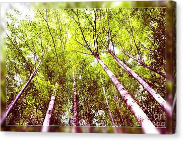 Canvas Print featuring the photograph Forest 2 by Jean Bernard Roussilhe