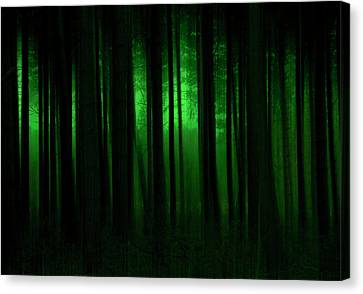 Forest Abstract03 Canvas Print by Svetlana Sewell