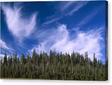 Forest And Sky - Big Dry Meadow Canvas Print by Soli Deo Gloria Wilderness And Wildlife Photography