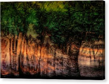 Forest At Sundown Canvas Print by Phyllis Clarke