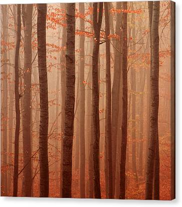 Forest Barcode Canvas Print by Evgeni Dinev