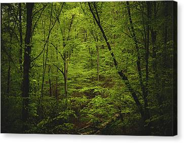 Canvas Print featuring the photograph Forest Beckons by Shane Holsclaw