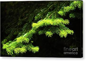 Forest Branch Canvas Print by Svetlana Sewell
