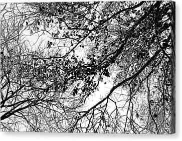 Forest Canopy Bw Canvas Print by Az Jackson