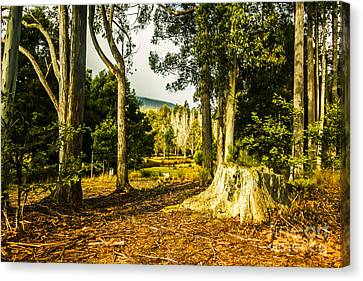 Forest Clearing In The Woods Canvas Print