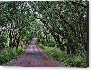 Forest Corridor Canvas Print by Douglas Barnard