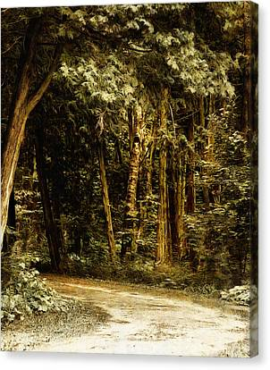 Forest Curve Canvas Print