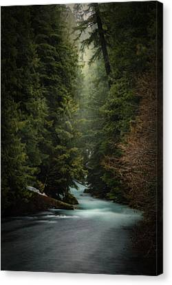Canvas Print featuring the photograph Forest Enchantment by Cat Connor