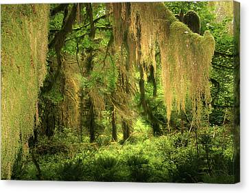 Forest Fantasy - Quinault - Gateway To Paradise On The Olympic Peninsula Wa Canvas Print by Christine Till