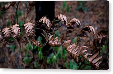 Forest Ferns Canvas Print by Glenn DiPaola