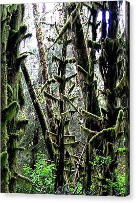Forest Finery Canvas Print by Will Borden
