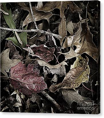 Forest Floor - Leaf 10 Canvas Print by Pete Hellmann