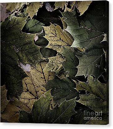 Forest Floor - Leaf 12 Canvas Print by Pete Hellmann