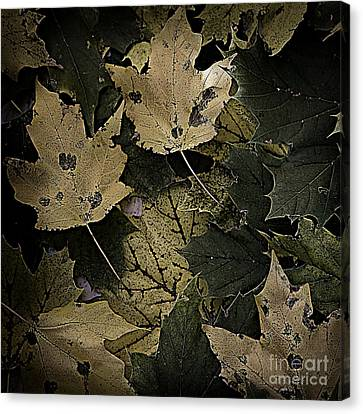 Forest Floor - Leaf 13 Canvas Print by Pete Hellmann