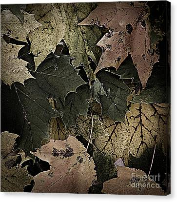 Forest Floor - Leaf 14 Canvas Print by Pete Hellmann