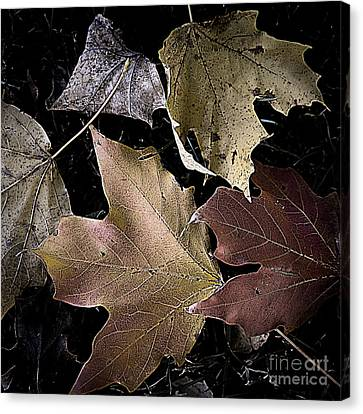 Forest Floor - Leaf 2 Canvas Print