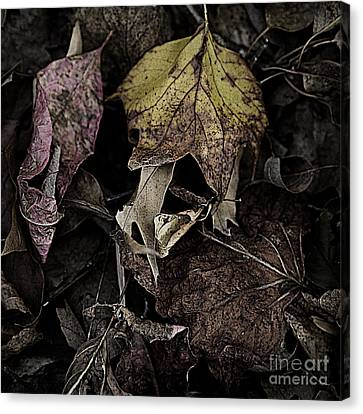 Forest Floor - Leaf 9 Canvas Print by Pete Hellmann