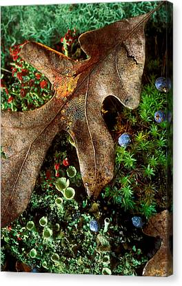 Forest Floor Detail Canvas Print by Lloyd Grotjan
