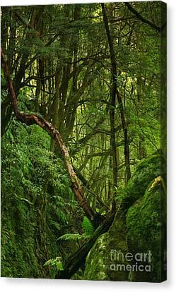 Forest Canvas Print by Gaspar Avila